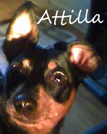 Attila Name