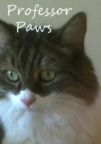 Professor Paws Name